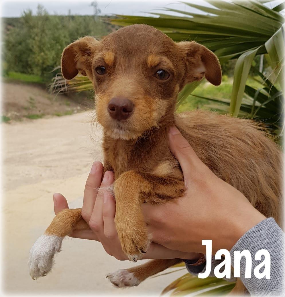 JANA – ¡Adoptada! –