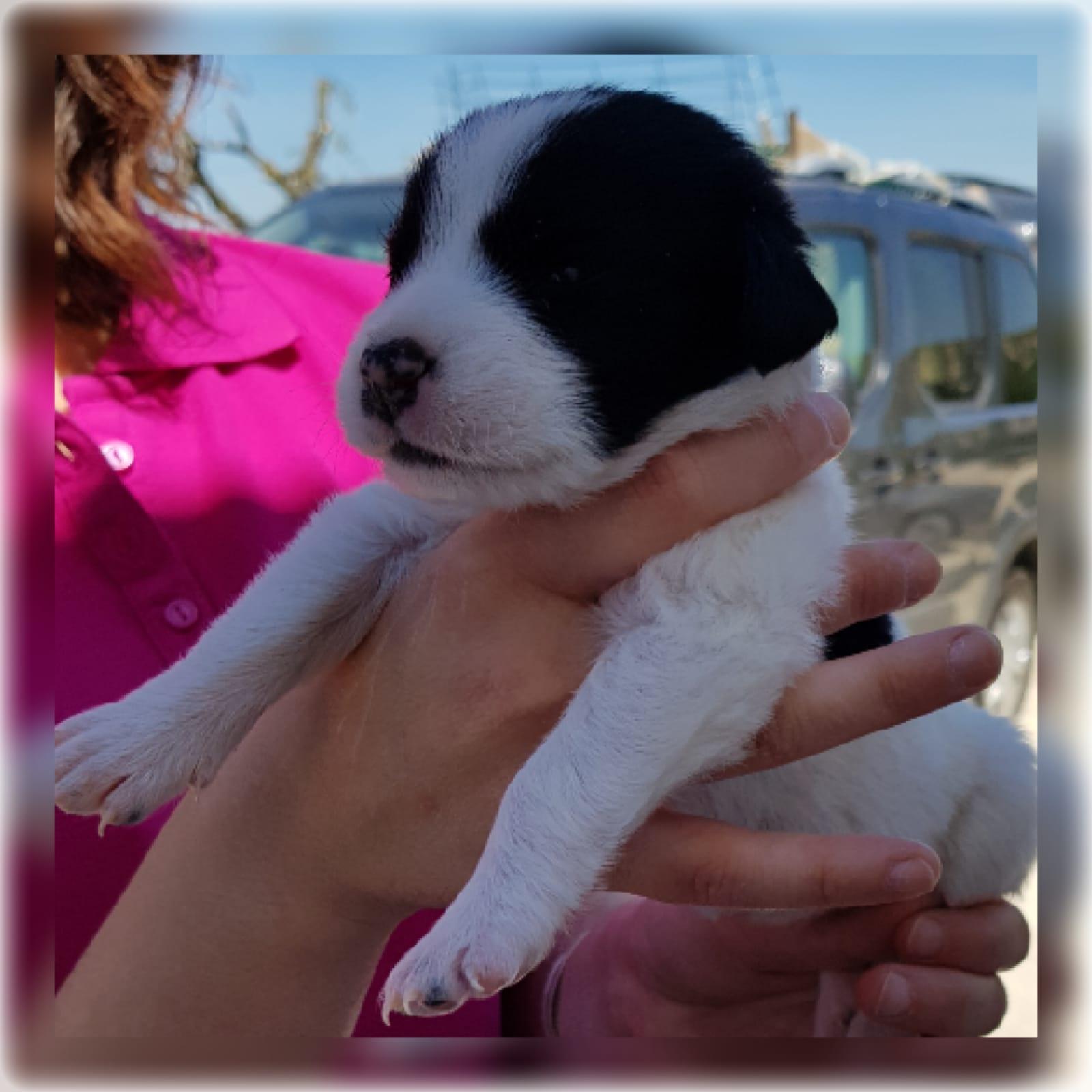 NALA – ¡Adoptada! –