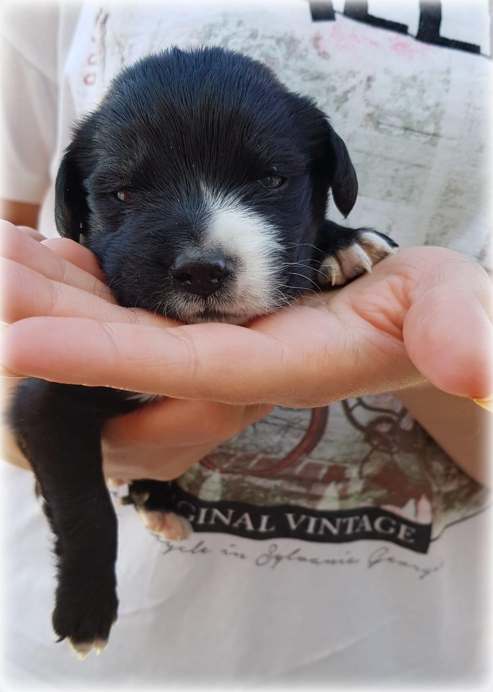 SIMBA – ¡Adoptado! –