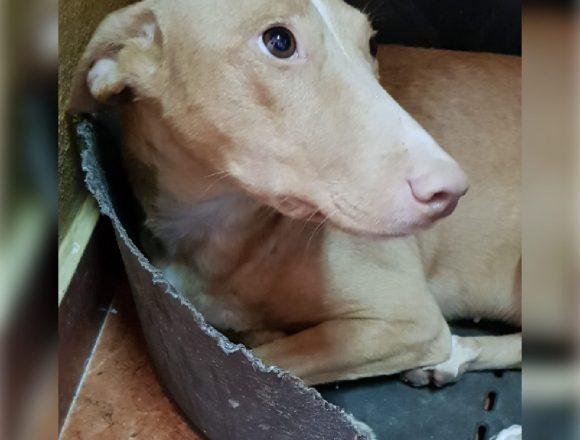 INDIA – ¡Adoptada! –