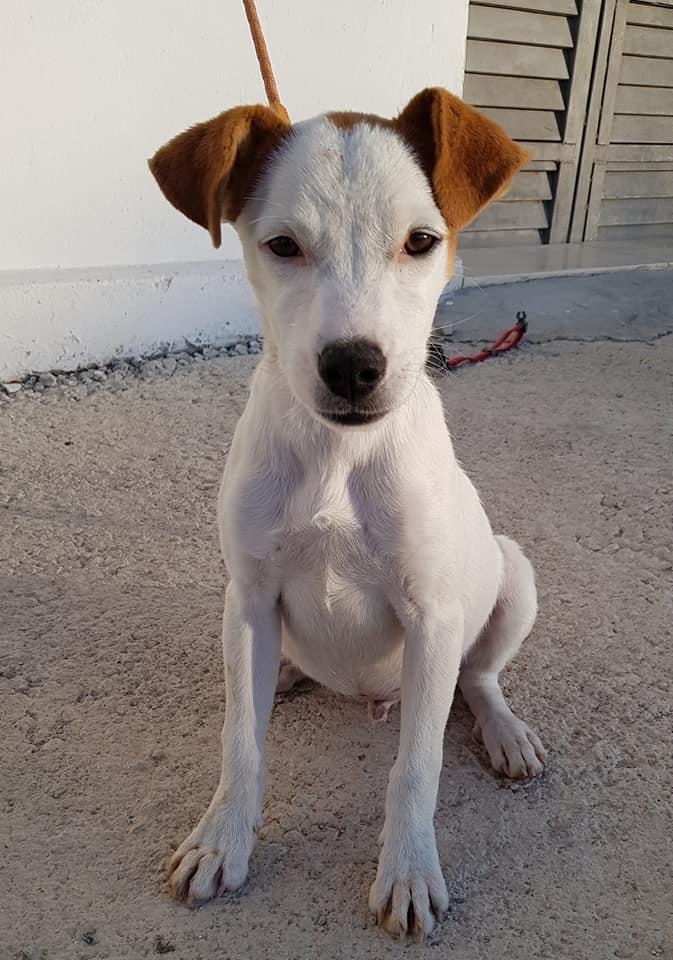 PONGO – ¡Adoptado! –